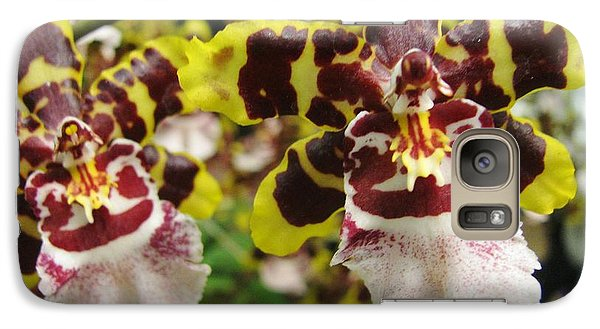 Galaxy Case featuring the photograph Double Odontoglossum Orchid by Alfred Ng