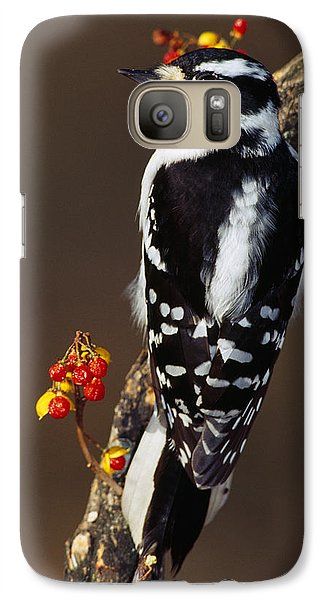 Downy Woodpecker On Tree Branch Galaxy S7 Case by Panoramic Images