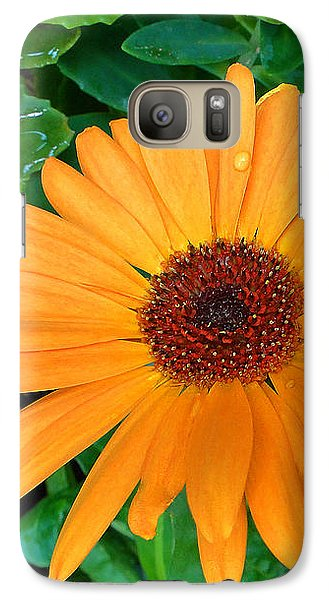 Galaxy Case featuring the photograph Droplets On A Daisy by Sue Melvin