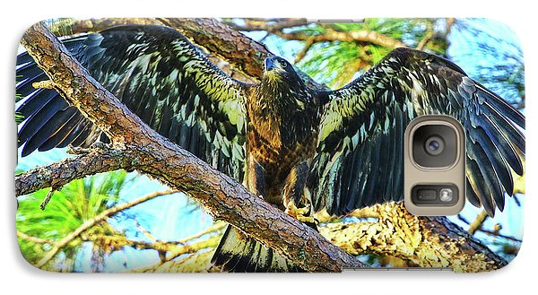 Galaxy Case featuring the photograph Eagle Fledgling II 2017 by Deborah Benoit