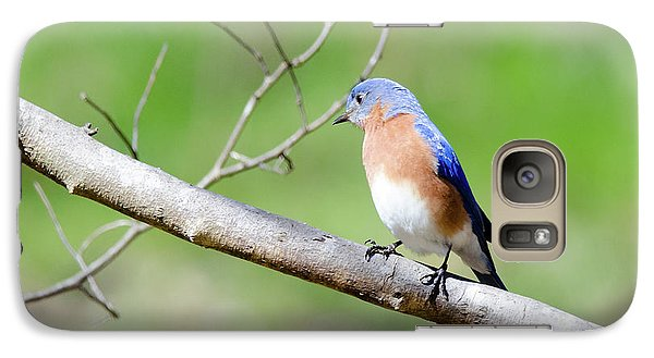 Galaxy Case featuring the photograph Eastern Bluebird by George Randy Bass