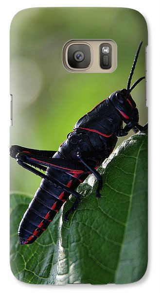 Eastern Lubber Grasshopper Galaxy S7 Case