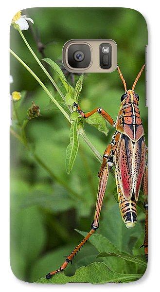 Eastern Lubber Grasshopper  Galaxy S7 Case by Saija  Lehtonen