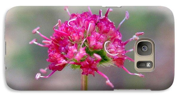 Galaxy Case featuring the photograph Eriogonum Pyrolaefolium by Irina Hays