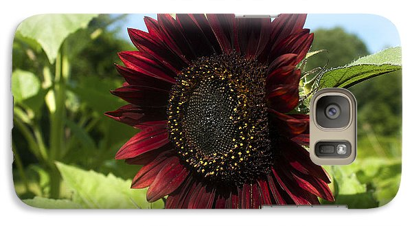 Galaxy Case featuring the photograph Evening Sun Sunflower #1 by Jeff Severson