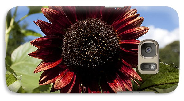 Galaxy Case featuring the photograph Evening Sun Sunflower #2 by Jeff Severson