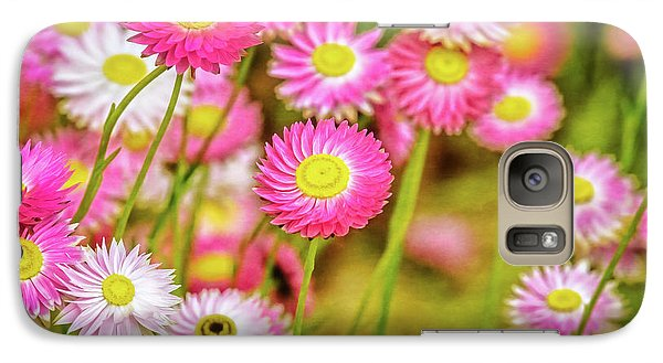 Galaxy Case featuring the photograph Everlasting Daisies, Kings Park by Dave Catley