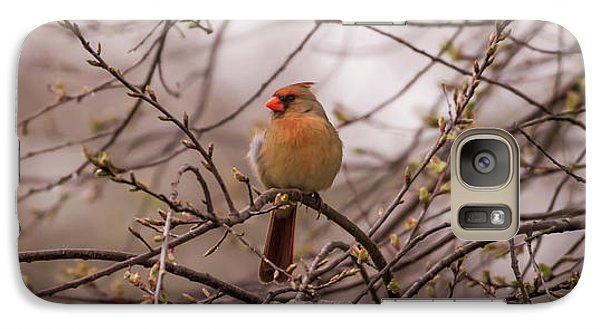 Galaxy Case featuring the photograph Female Cardinal In Spring 2017 by Terry DeLuco