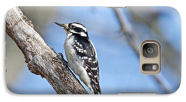 Galaxy Case featuring the photograph Female Downey Woodpecker 1104  by Michael Peychich