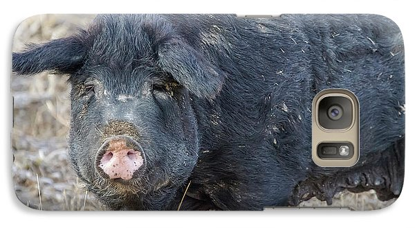 Galaxy Case featuring the photograph Female Hog by James BO Insogna
