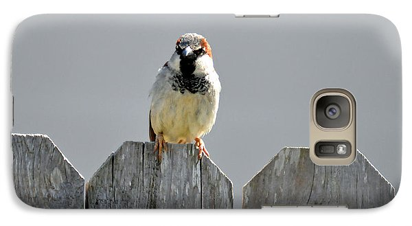 Galaxy Case featuring the photograph Fence Sitting  by Teresa Blanton