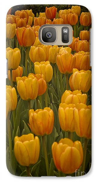Galaxy Case featuring the photograph Fine Lines In Yellow Tulips by Michael Flood