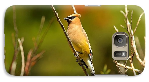Cedar Waxing Galaxy S7 Case - Fishercap Cedar Waxwing by Adam Jewell