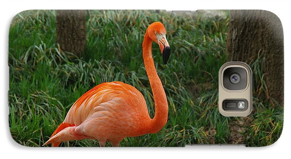 Galaxy Case featuring the photograph Flamingo 1 by Robyn Stacey