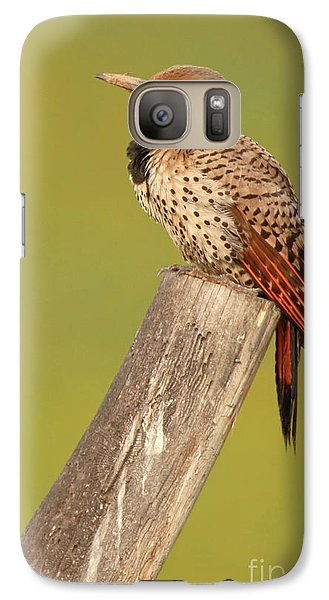 Galaxy Case featuring the photograph Flicker Asleep On Perch by Max Allen
