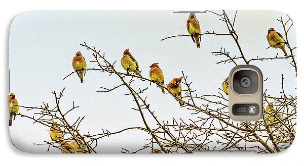Cedar Waxing Galaxy S7 Case - Flock Of Cedar Waxwings  by Geraldine Scull