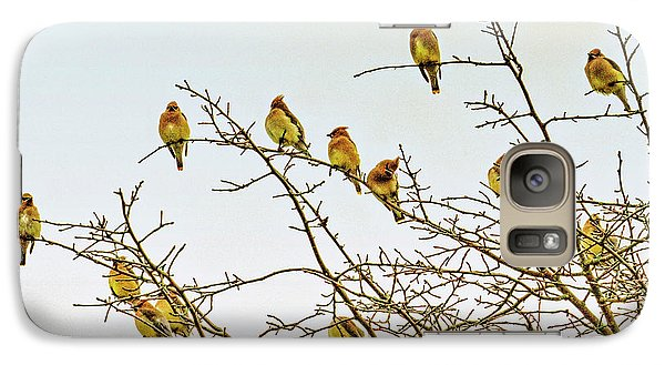 Flock Of Cedar Waxwings  Galaxy Case by Geraldine Scull