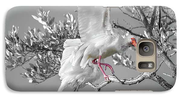 Ibis Galaxy S7 Case - Florida Keys White Ibis by Betsy Knapp