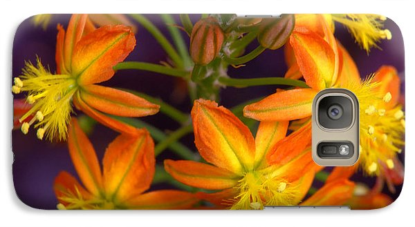 Galaxy Case featuring the photograph Flowers Of Spring by Stephen Anderson
