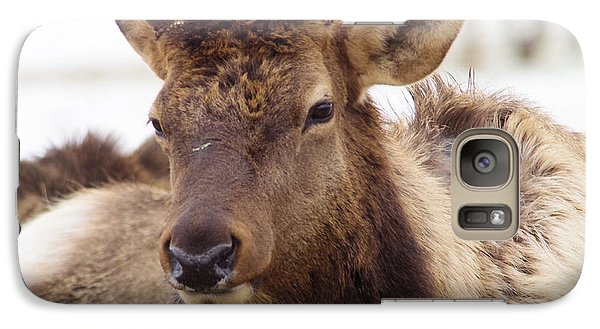 Galaxy Case featuring the photograph Gaze From A Bull Elk by Jeff Swan