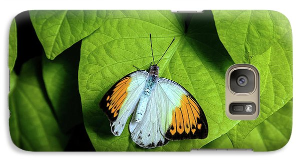 Galaxy Case featuring the photograph Giant Orange Tip Butterfly by Tom Mc Nemar