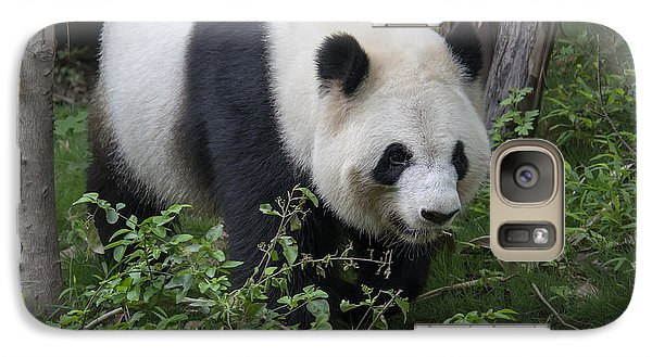 Galaxy Case featuring the photograph Giant Panda by Wade Aiken