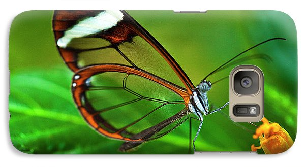 Galaxy Case featuring the photograph Glasswinged Butterfly by Ralph A Ledergerber