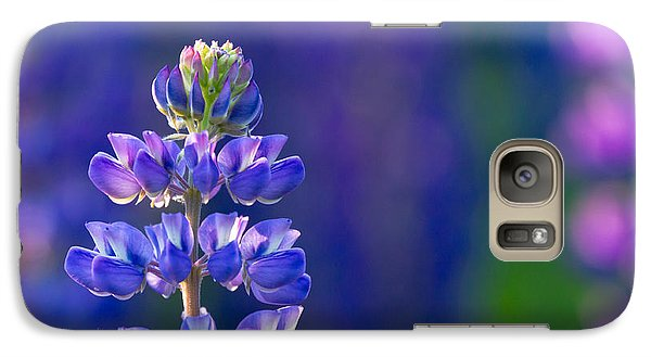 Galaxy Case featuring the photograph Golden Hour Lupine by Mary Amerman