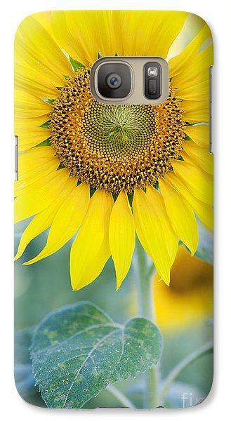 Sunflower Galaxy S7 Case - Golden Sunflower by Tim Gainey