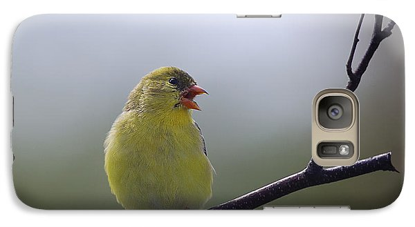 Galaxy Case featuring the photograph Goldfinch Song by Susan Capuano