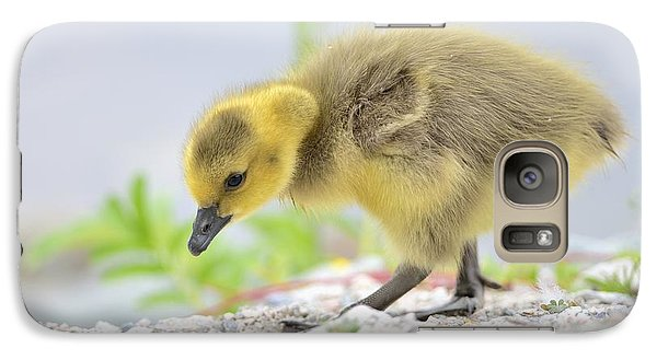 Galaxy Case featuring the photograph Gosling by Kathy King