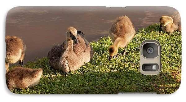 Galaxy Case featuring the photograph Goslings Basking In The Sunset by Chris Flees