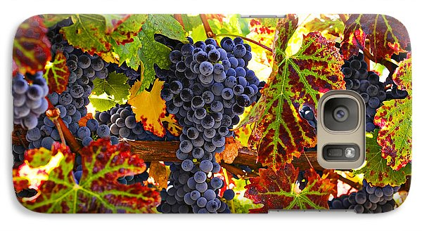 Grapes On Vine In Vineyards Galaxy S7 Case by Garry Gay