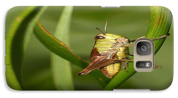 Galaxy Case featuring the photograph Grasshopper by Jouko Lehto