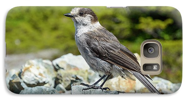 Galaxy Case featuring the photograph Gray Jay, Canada's National Bird by Kathy King