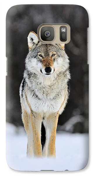 Wolves Galaxy S7 Case - Gray Wolf In The Snow by Jasper Doest