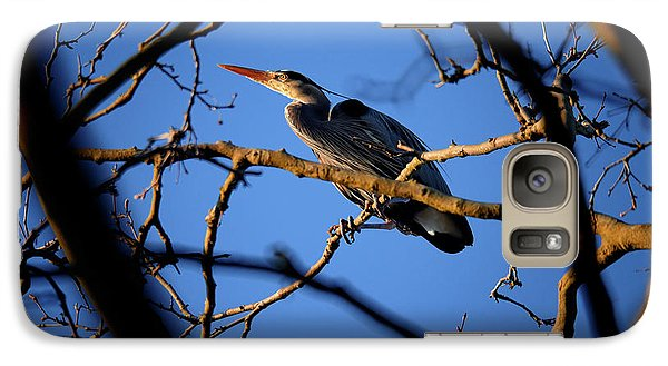 Galaxy Case featuring the photograph Great Blue Heron Nesting 2017 - 2 by Terry Elniski