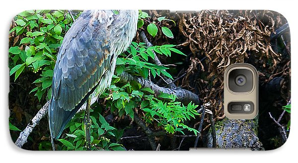 Galaxy Case featuring the photograph Great Blue Heron Perch by Edward Peterson