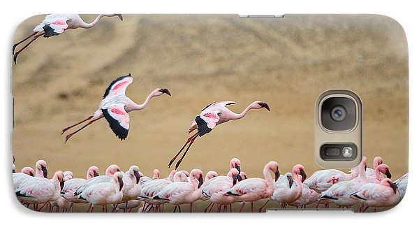 Greater Flamingos Phoenicopterus Galaxy S7 Case by Panoramic Images