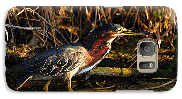 Galaxy Case featuring the photograph Green Heron by Larry Ricker