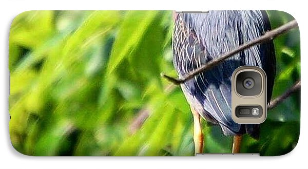 Galaxy Case featuring the photograph Green Heron by Sumoflam Photography