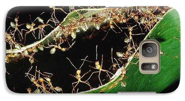 Green Tree Ants Galaxy S7 Case by B. G. Thomson