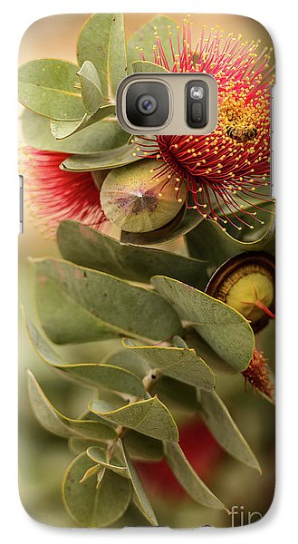 Galaxy Case featuring the photograph Gum Nuts by Werner Padarin