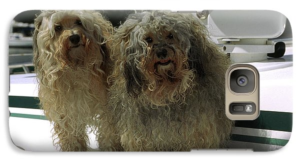 Galaxy Case featuring the photograph Havanese Dogs by Sally Weigand