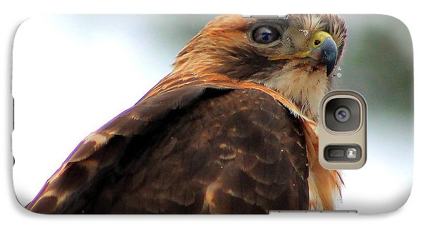 Galaxy Case featuring the photograph Hawk by Bruce Patrick Smith