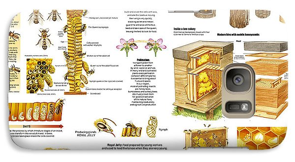Galaxy Case featuring the drawing Honey Bees Infographic by Gina Dsgn