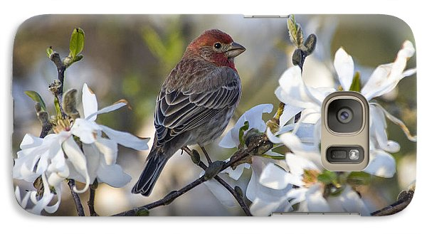 Galaxy Case featuring the photograph House Finch - D009905 by Daniel Dempster