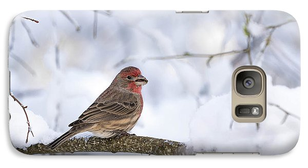Galaxy Case featuring the photograph House Finch In Snow by Brian Bonham