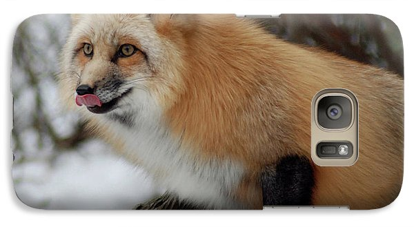 Galaxy Case featuring the photograph Hungry Fox by Richard Bryce and Family