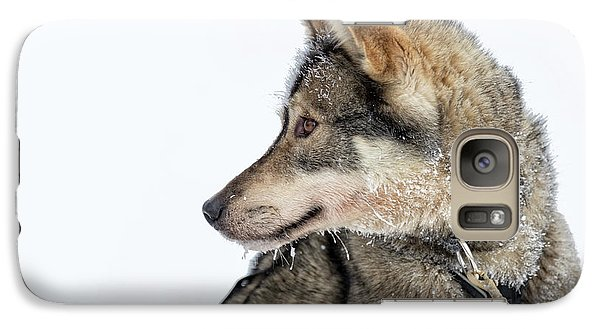 Galaxy Case featuring the photograph Husky Dog by Delphimages Photo Creations